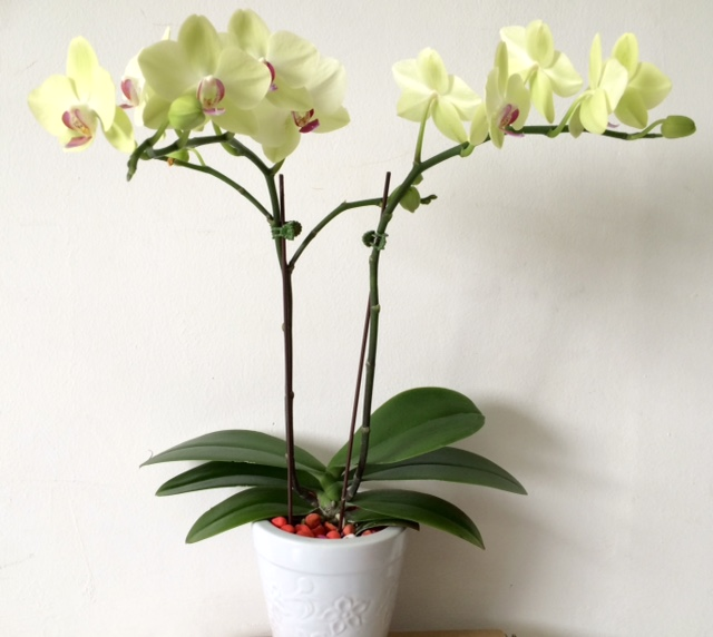 orchid wedding flowers photo - 1