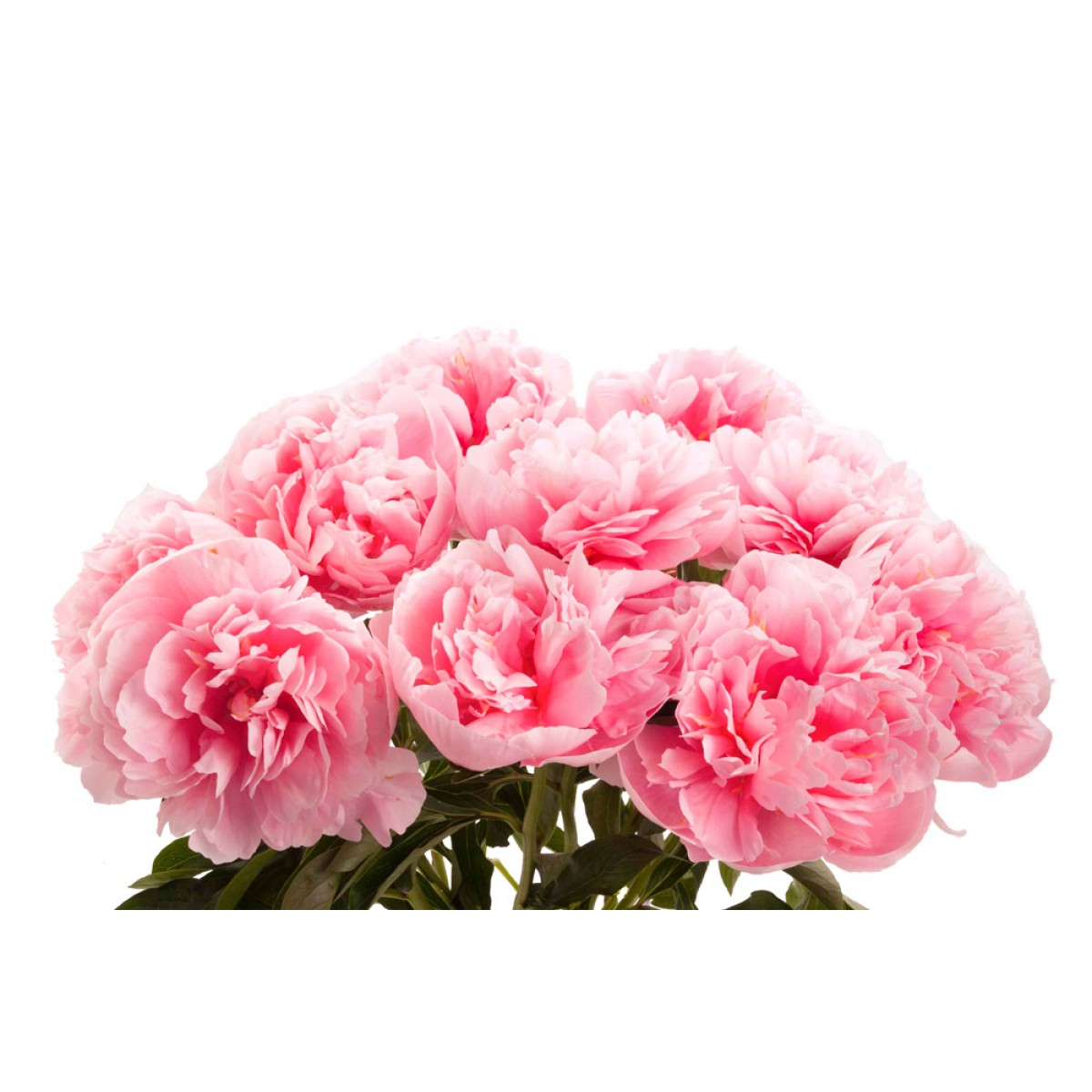 wedding flowers peony photo - 1