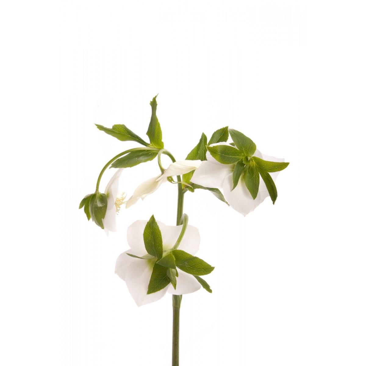 white wedding flowers types photo - 1