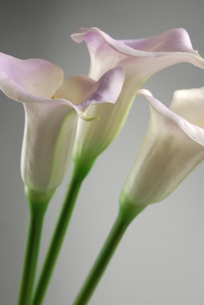 calla lily wedding flowers photo - 1