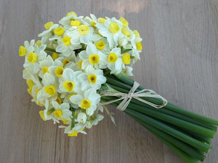 daffodils wedding bouquets photo - 1