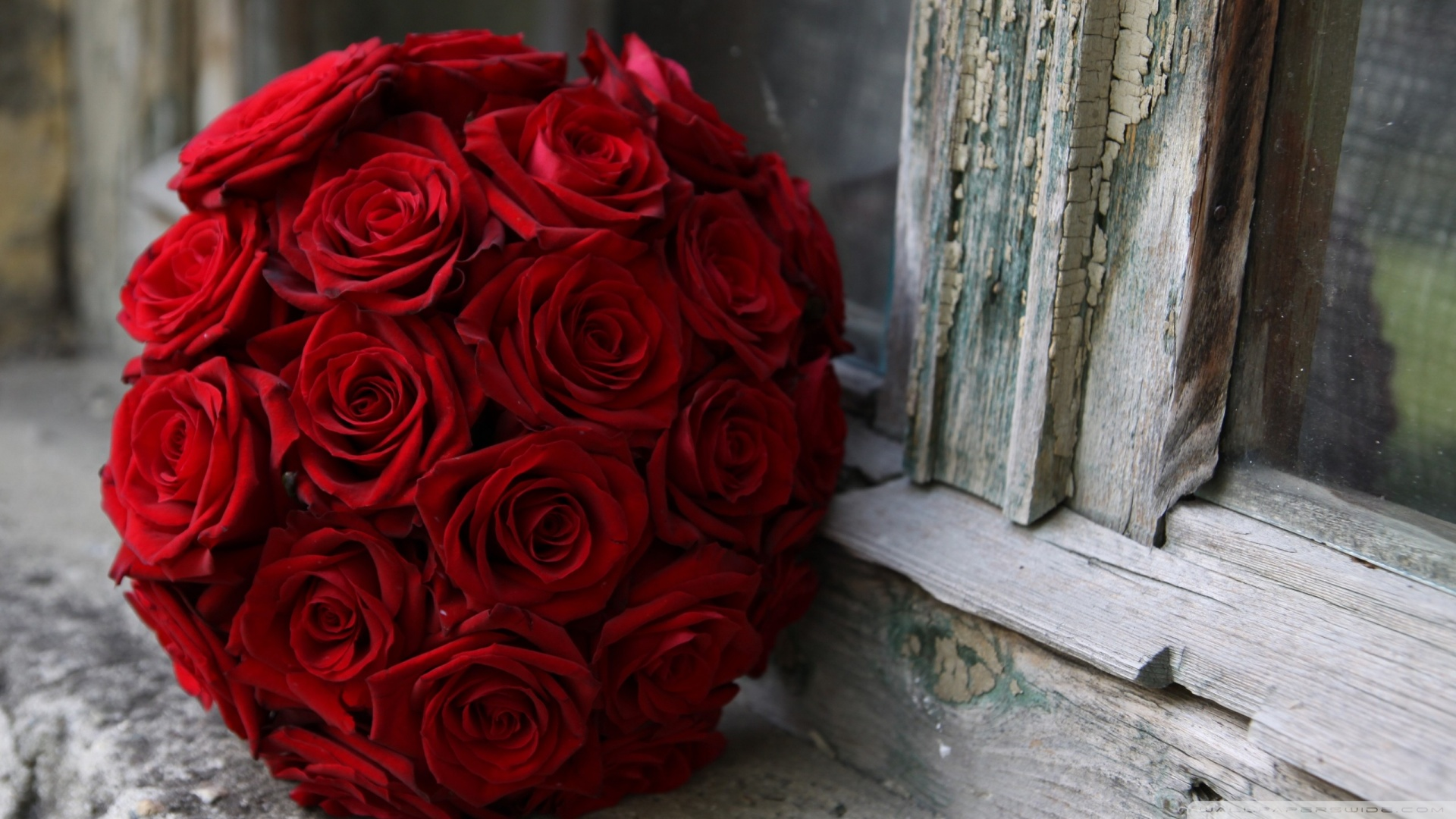 wedding bouquets with red roses photo - 1