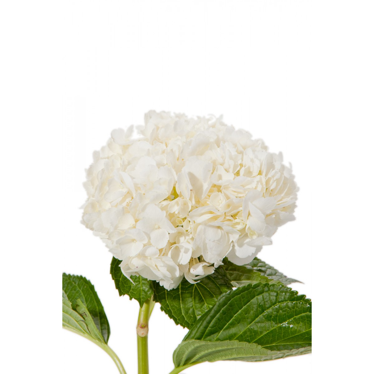 wedding flowers pricing photo - 1